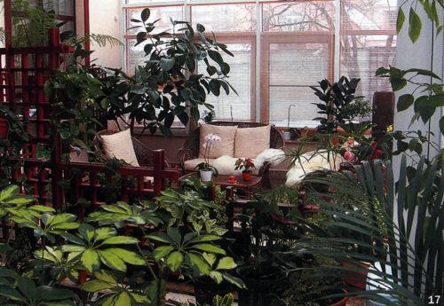 17 зимний сад на террасе озеленение